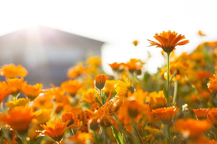 GAK_orangemagaret500-thumb-750x500-2864